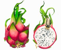 dragon fruit painting - Google Search