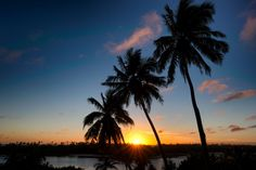 Sunrise Palm - Paradise weather - sunrise and sunset - on a beautiful island.
