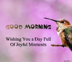 New Good Morning Quotes