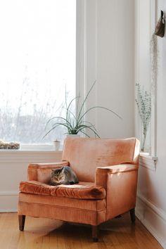 Cat approved orange velvet chair