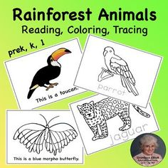 Rainforest Printable Animals Booklet for Reading, Coloring, and Tracing PreK-1 Morpho Butterfly, Blue Morpho, First Grade Lessons, Green Iguana, Red Eyed Tree Frog, Rainforest Animals, Printable Animals, Emergent Readers, Elementary Education