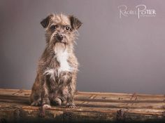 pet photography (tips) by rachel potter