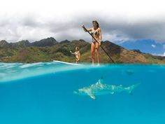 15 Must See Standup Paddle Boarding Photos: Close Encounters of the Ocean Kind... paddleboarding over a shark