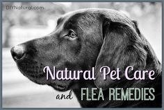 Natural Flea Remedies and Other Natural Pet Care Solutions – These natural flea remedies, and other natural pet care solutions, will help you care for your beloved pets without using chemical laden commercial products.