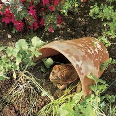 Want to control flying insects and plant-destroying cutworms naturally?  Give toads a habitat near your beds by making them a shelter from a cracked or chipped terra-cotta pot.   Photo: Kolin Smith   thisoldhouse.com