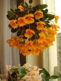 Exotic Flowers, Beautiful Flowers, Arrangements Ikebana, Dendrobium Orchids, Orchidaceae, Live Plants, House Plants, Flower Power, Grass