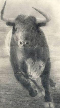 precioso ¡¡ Frank Auerbach, Charging Bull, King Drawing, Bull Riding, Geek Culture, Cattle, Animal Photography, Moose Art, Geek Stuff