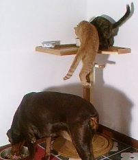 The Dog Proof Cat Feeder