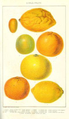 from: vintage printables