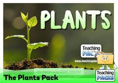 Discover the wonderful world of plants with our fantastic collection of teaching, activity and classroom display resources. Includes a child-friendly guide to plant growth, pollination, photosynthesis, classification, adaptation and much more!
