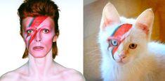 """Cat People.."" 🐱🔥🔥🔥 David Bowie"