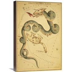 """Global Gallery Draco and Ursa Minor, 1825 by Jehoshaphat Aspin Graphic Art on Wrapped Canvas Size: 24"""" H x 16"""" W x 1.5"""" D"""