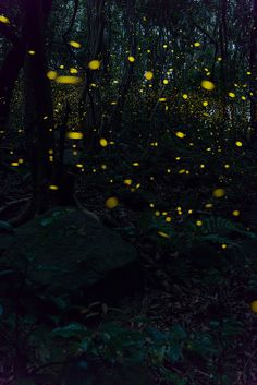 森のホタル Faeries, Fantasy Art, Fairy Tales, Scenery, Lights, Landscape, Amazing, Water, Fireflies