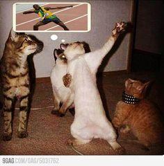 Usain Bolt's cat
