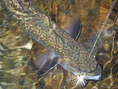 N.C. Wildlife Resources Commission > News > Blogs > NCWRC Blog - Winter Trout Fishing in Western North Carolina