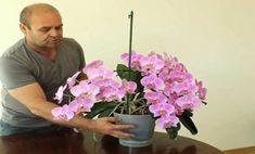 Grădinărit Archives - Page 2 of 18 - Fasingur Container Gardening, Gardening Tips, Reiki Books, Reiki Training, Learn Reiki, Fall Decor, Tropical, Flowers, Healing