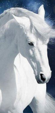 """ on white horses let me ride away....."""