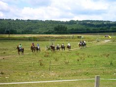 Trail Rides - Rt 80 Quarry Ridge Stables - Syracuse, NY