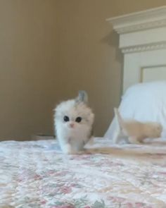 Funny Cats and Kittens Meowing video Cute Little Kittens, Cute Baby Cats, Cute Little Animals, Cute Funny Animals, Kittens Cutest, Funny Cats, Baby Kitty, Ragdoll Kittens, Sleepy Kitty