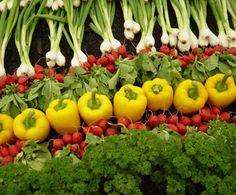 Göz Sağlığınızı Doğal Yollarla Koruyun!Yağda eriyen vitaminler sınıfından olan A vitamini; karaciğer, yumurta, süt, balık ve balık yağı ile tereyağı gibi hayvansal kaynaklarda bol miktarda bulunuyor. Bunların yanı sıra brokoli, havuç, biber, kabağın içinde bulunduğu sarı ve yeşil sebzeler ile sarı meyvelerden de elde edilebiliyor.      Yazının Devamı: Göz Sağlığınızı Doğal Yollarla Koruyun! | Bitkiblog.com   Follow us: @bitkiblog on Twitter | Bitkiblog on Facebook