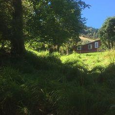 House for sale. Akaroa, New Zealand. Homesteading, New Zealand, Cabin, House Styles, Plants, Home Decor, Decoration Home, Room Decor, Cabins