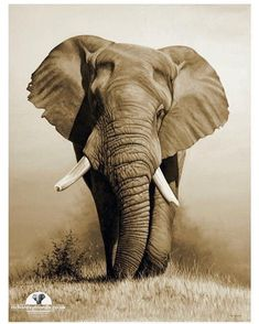 Welcome to the fine art gallery and online shop of Richard Symonds where you can buy limited edition prints of elephants, tigers, lions and other wildlife art. Elephant Love, Elephant Art, African Elephant, Elephant Paintings, Wildlife Paintings, Wildlife Art, Wild Life, Elefante Tattoo, Elephants Photos