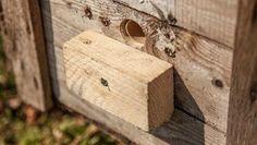 Anleitung: Einen Hummelkasten selbst bauen a wooden block serves as a runway at the bumblebee box Mini Terrarium, Wall Terrarium, Garden Terrarium, Succulent Terrarium, Succulents Garden, Herb Garden Pallet, Pallets Garden, Vegetable Bed, Garden In The Woods