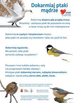 Jak mądrze dokarmiać ptaki – plakat i ulotka do pobrania Polish Language, Math For Kids, Birds, Teaching, Kindergarten, Education, World, School, Animals