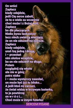 Cane Corso, Dog Quotes, Motto, Animals And Pets, Nostalgia, Sad, Dogs, Emoji, Cakes