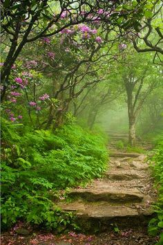 Lovely path