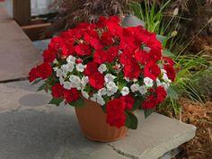 Summer Container Garden Recipes
