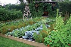 Beginning gardeners should start with beans, squash, and radishes. For flowers, try zinnia, marigold, and cosmos. zinnia, flower