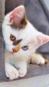 So süß. Erinnerungen für interaktive Kunstzeitschriften  - Kute Katz #tiere #tiere bilder #tiere zitate