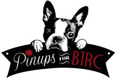 Purchase 2016 Calendar | Pinups For Boston Terrier Rescue Canada Boston Terrier Rescue, Boston Terriers, 2016 Calendar, Pin Up, Canada, Boston Terrier, Terriers