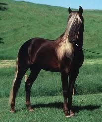 isn't she beautiful?  this is a rocky mountain mare