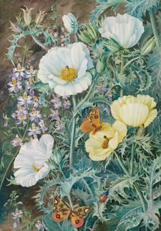 11. Mexican Poppies, Chilian Schizanthus and Insects. - Marianne North - Kew Gardens Botanical Prints - Kew Botanical Prints
