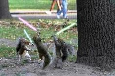A long time ago in a galaxy far far away... Paw wars