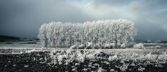 Frozen landscape by Olivier Ferrari on Landscape Photography, Ferrari, Vineyard, Frozen, Explore, Outdoor, Outdoors, Scenery Photography, Vine Yard