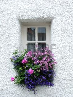 Old Scottish window with flowers Stock Photo - 3537857