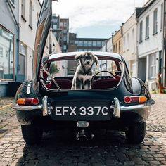 #Repost @drivetribe (@get_repost)  Man's best friend. The dog's cute too.   @alexpenfold   #jaguar #etype . . . . #drivetribe #cars #carspotting #supercar #instacar #carsofinstagram #cargram #itswhitenoise #blacklist