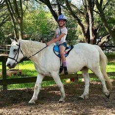 9 Best Saddles, Pads, Bareback Pads images   Saddles, Roping saddles