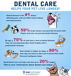 Nobody likes to go to the dentist, especially our pets. But it is vital for their health and lifespan.