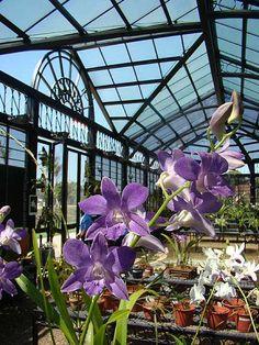 Parques 2 (orquidário)