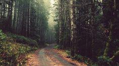 let's take a walk.