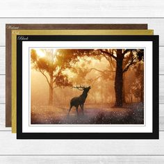 'Stag in an Autumn Forest Landscape' Framed Photographic Print Big Box Art Frame Colour: Oak