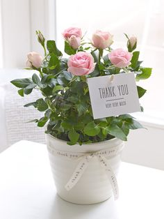 This beautiful, bright rose is ideal for those occasions when you want to show someone how much you really appreciate them. Our fresh, pretty pink rose plant looks lovely and is a thank you gift that will last for weeks too.<br /><br />Featuring a pink flowering rose plant in a white ceramic pot with a Thank You pick and ribbon.
