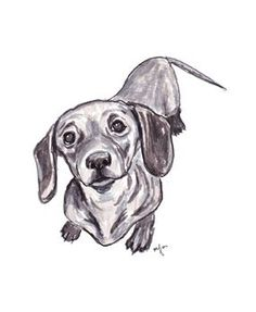 Dachshund sketch. This looks just like my little Elsie!