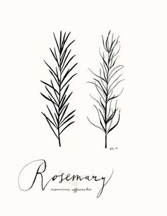 rosemary- simple, but I love it