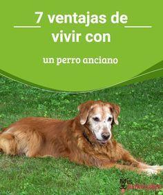 7 ventajas de vivir con un perro anciano Compartir tu hogar con un can siempre es una buena opción, cualquiera sea tu edad y la del animalito. Conoce las ventajas de convivir con un perro anciano. #perro #anciano #ventajas #consejos