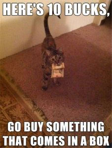 cat wants a box